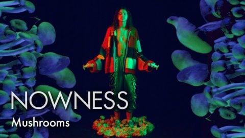 Take a psychedelic mushroom trip in partnership with Somerset House | NOWNESS